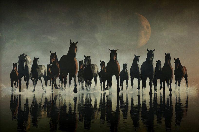 Dierenrijk – Paarden in de zee van Jan Keteleer