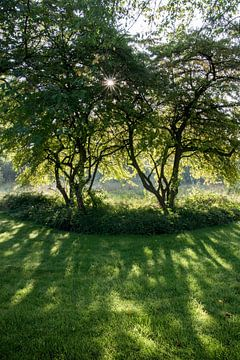 De Zon spelend met de bladeren von Pauline Aalfs