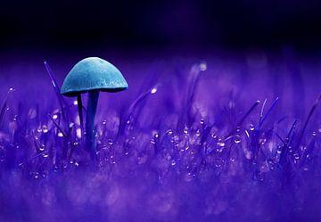 Eenzame paddenstoel blauw/paars von C Dekker