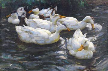 Sechs Enten im Wasser, ALEXANDER KOESTER, Ca. 1900-1905 von Atelier Liesjes