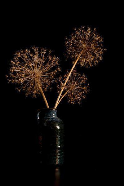 stil leven met gedroogde bloemen van uienbollen van Compuinfoto .