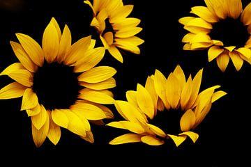 Sunflower van Els Steutel