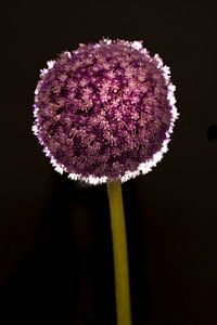 Paarse bloem op steel van