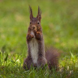 Portrait d'écureuil sur Tobias Luxberg