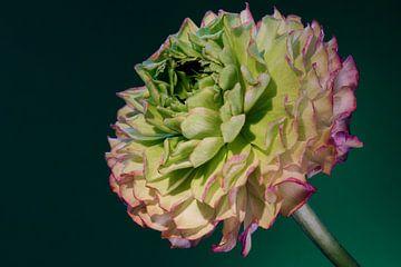 Fleur von Rob Rijfkogel