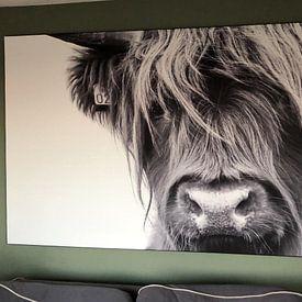 Klantfoto: Portret Schotse Hooglander zwart-wit van Sandra van Kampen, als print op doek