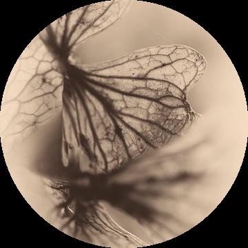 Macro gedroogd bloemblad nostalgie van Marianne van der Zee