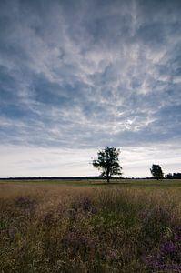 Strabrechtse Heide 123