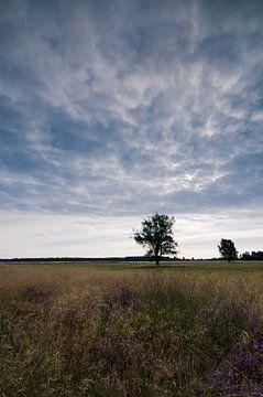 Strabrechtse Heide 123 van Deshamer