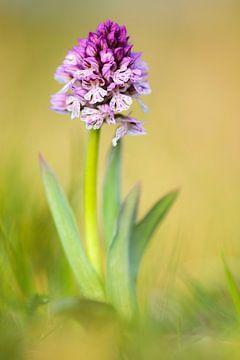 drietandige orchidee van Daniela Beyer