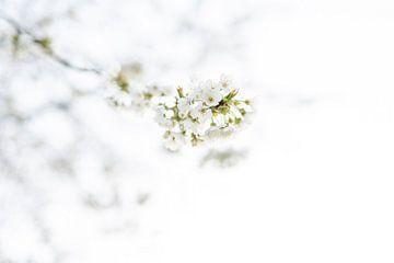 Prachtige Bloesem! van Evelien Heuts-Flachs