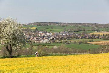 Bloesemtijd in Zuid-Limburg