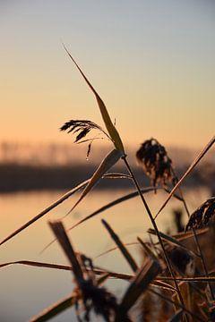 Winterwonderland in de vroege ochtend van Rebecca Dingemanse