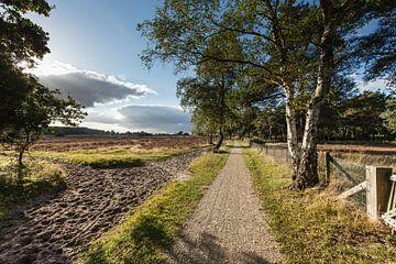 Hoorneboegse Heide, région de la lande près de Hilversum, piste cyclable sur