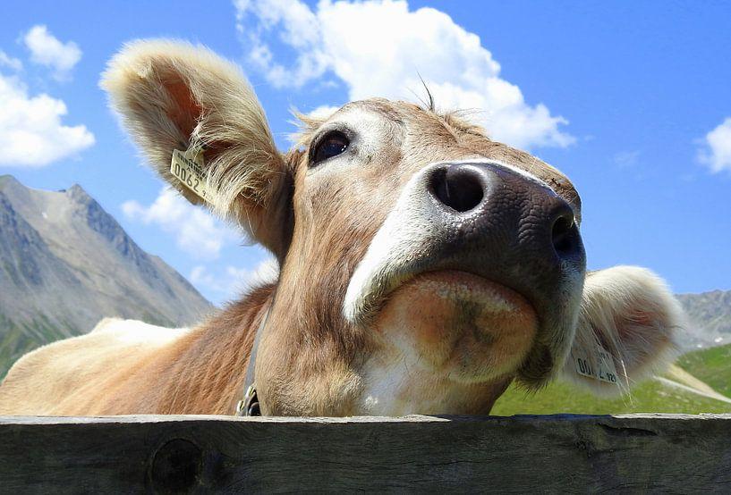 Koe in Tirol van Gert van der Hee