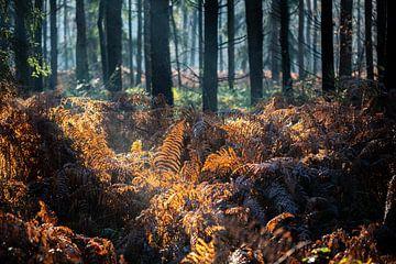 Farne im Herbstwald von Edwin Butter
