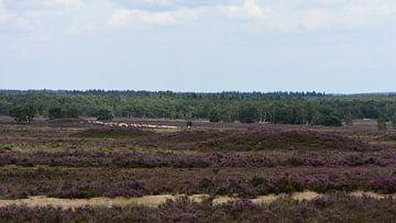 Blick über die Heide von Gerard de Zwaan