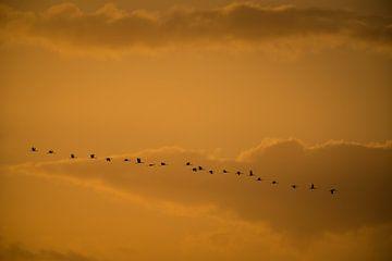 Kraanvogels sur Stijn Smits
