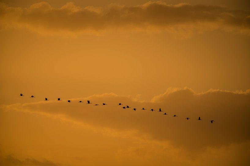 Kraanvogels van Stijn Smits