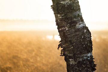 Strabrechtse Heide 197 sur Desh amer