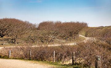Duinpad met bosjes 2 van Percy's fotografie