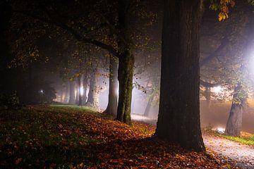 Nachtval van Tvurk Photography