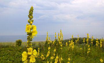 Bloemen in de duinen van Jan Kranendonk