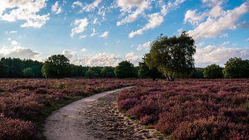Lage zonnestralen en blauwe lucht boven een paarse heide van Andrea de Jong