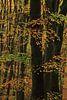 Herfstbos na een regenbui van Jacqueline Gerhardt thumbnail