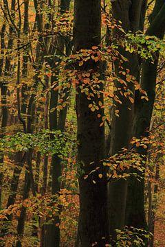 Herfstbos na een regenbui van Jacqueline Gerhardt