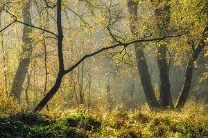 Waldszene mit goldenem Morgenlicht von Peter Bolman
