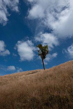 Lonely tree von Bas Glaap