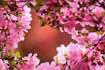 Bloesem in de Japanse Tuin van
