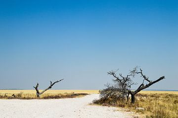 Afrikaanse natuur in Namibië van
