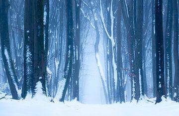Schneelandschaft auf der Veluwe von Paul Begijn