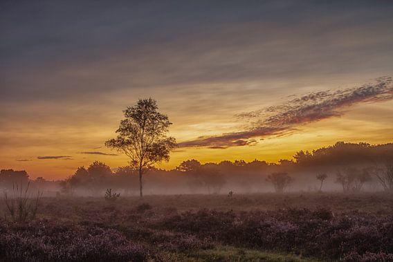 Zons opkomst op de Heide bij Theehuis 't Bluk in Laren van ingrid schot