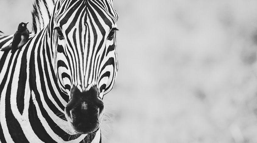 Intense strepen - een zebra portret van Sharing Wildlife