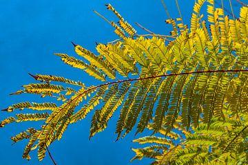 Planten in het Turia Park in Valencia van Scarlett van Kakerken