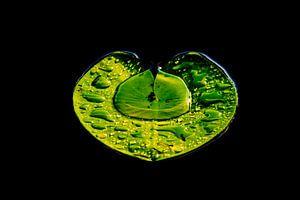 Eenzaam lelieblad in het water