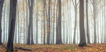 Betoverend bos in het panorama van Tobias Luxberg