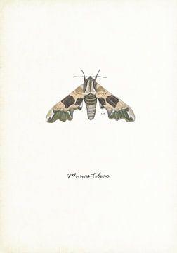 Lindepijlstaart (nachtvlinder) van Jasper de Ruiter