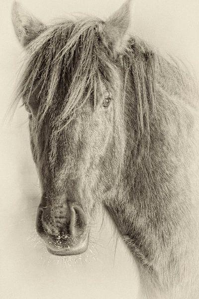 The Horse van Renald Bourque