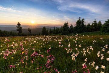 Sommer im Erzgebirge von Daniela Beyer