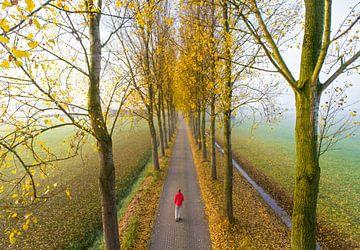 Wandelaar in laan in herfsttooi van Jonathan Vandevoorde