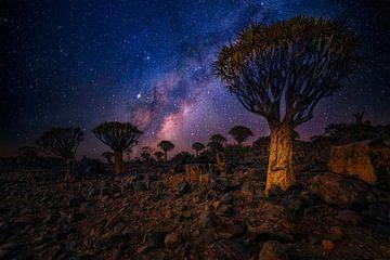 Köcherbaum-Wald von Joris Pannemans - Loris Photography