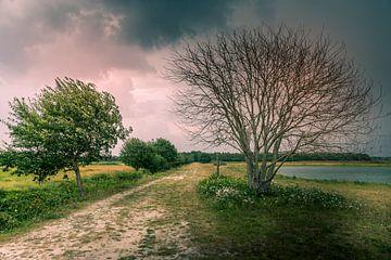Bomen net voor een enorme regenbui van Ingrid Honders