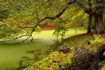 Automne dans la forêt de Groenendaal, Heemstede sur Dick Portegies