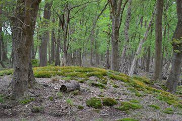 In den Wäldern bei Niebert und Nuis von Bernard van Zwol