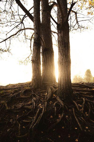 Zonsondergang bos herfst  van Marloes Bogaarts