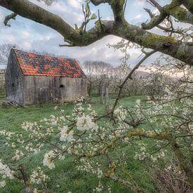 Schuurtje in een fruitboomgaard in de Betuwe van Moetwil en van Dijk - Fotografie